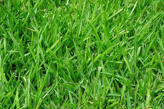 nawóz do trawy