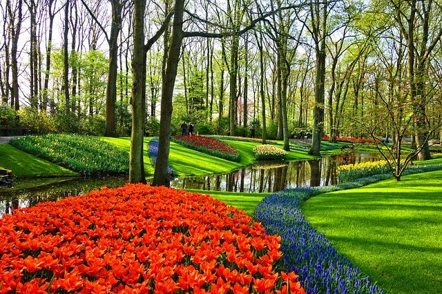 piękna trawa