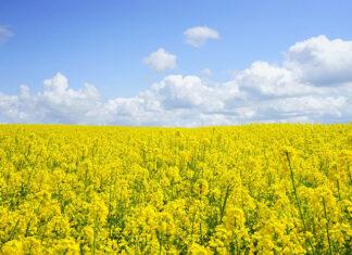 Co ma znaczenie przy wybieraniu zapraw do nasion